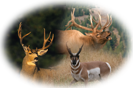 Montana Private Ranch Combo Hunts