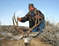Stout Montana Management Mule Deer