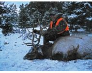 2013 Another Montana Bull for Pete