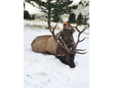 2015 Dan's Awesome Montana Bull