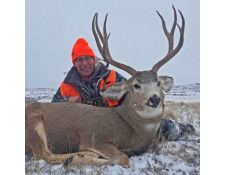 2017-A Super Montana Mulie for Todd