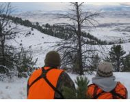 Watching a Montana Elk Herd