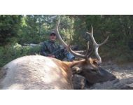 Crazy Horned Montana Archery Elk