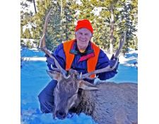 2017-Tom Great Montana Bull